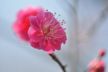『立春』は節変わり。旧暦では新しい年の始まり。